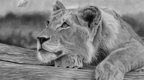 draw  realistic lion step  step  pencil