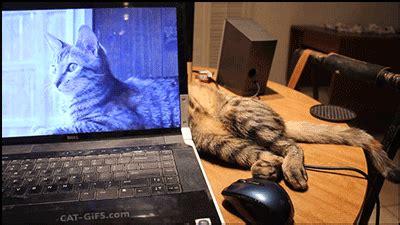 le canapé gif sur yvette laptop petit photos de chats