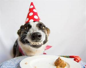 10 Cutest Pictures Of Birthday Dogs | Pets World