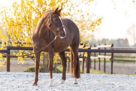 wie viel kostet ein eigenes pferd horse diaries