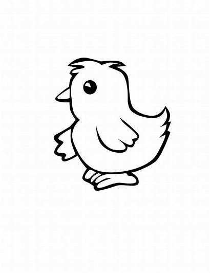 Chicken Clipart Colour Coloring Pages Clip Farm