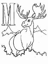 Moose Coloring Pages Printable Alphabet Letters Antler Animal Antlers Letter Drawing Cute Cartoon Realistic Elk Getdrawings Outline Getcoloringpages Comments Hunting sketch template