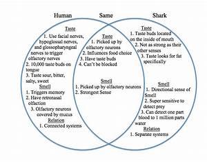 Frog And Human Venn Diagram Answers