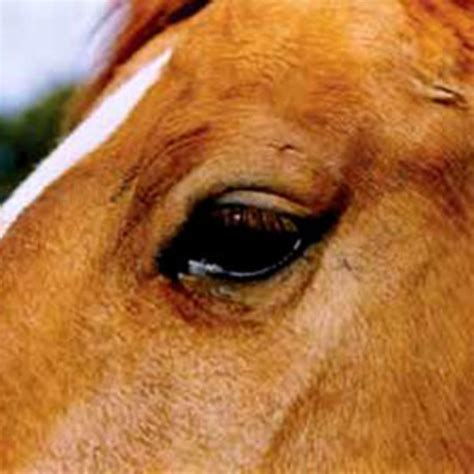 horse eye horses night equine vision riding care riders