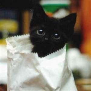 It's HD | Animals-Funny-Wallpapers: cute baby black kittens