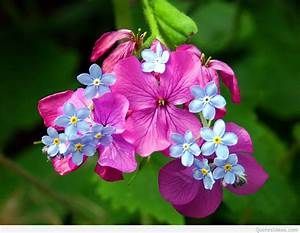 Awesome Spring wallpapers photos 2015 2016
