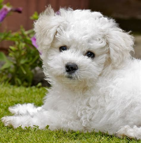 4 of the smallest dog breeds | A Tails Tale