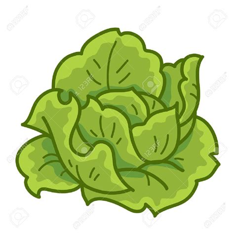 Lettuce Clipart Lettuce Clipart No Background Collection