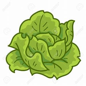 Lettuce clipart no background collection