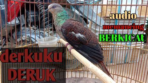 Maˈla͜izi̯a], seltener malaysien, ist eine konstitutionelle wahlmonarchie mit 32 millionen einwohnern, bestehend aus 13 bundesstaaten in südostasien auf der malaiischen halbinsel oder westmalaysia mit der hauptstadt kuala lumpur und ostmalaysia auf einem teil der insel borneo. DERKUKU DERUK / DERKUKU hutan /DERKUKU LOREK | pancingan DERKUKU bunyi - YouTube