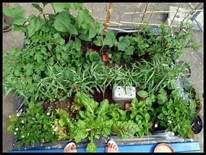 Tomaten Im Hochbeet : hochbeet nordwestbalkon ~ Whattoseeinmadrid.com Haus und Dekorationen