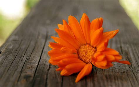 Orange Wallpaper Flower by Orange Flowers Wallpaper Hd Pictures One Hd Wallpaper