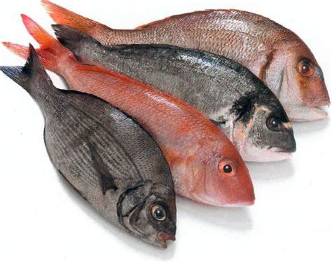 healthiest fish fresh fish vs farm raised fish how to choose the healthiest source bonfire