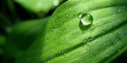Superhydrophobic Plants Natural Nature Superoleophobic Leaf Hydrophobic