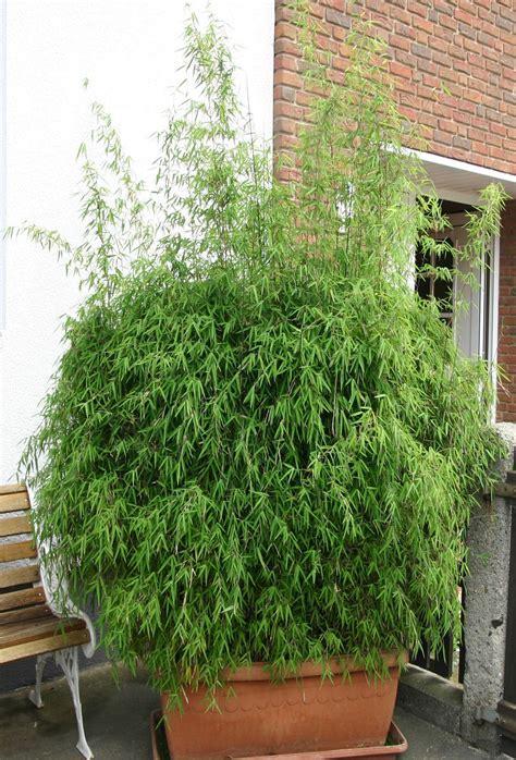 Bambuspflanzenshop  Pflanzkübel Mit Untersetzer Kaufen