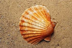 Besteht Sand Aus Muscheln : ausschnitt aus der muschel auf dem sand stockfoto ~ Kayakingforconservation.com Haus und Dekorationen
