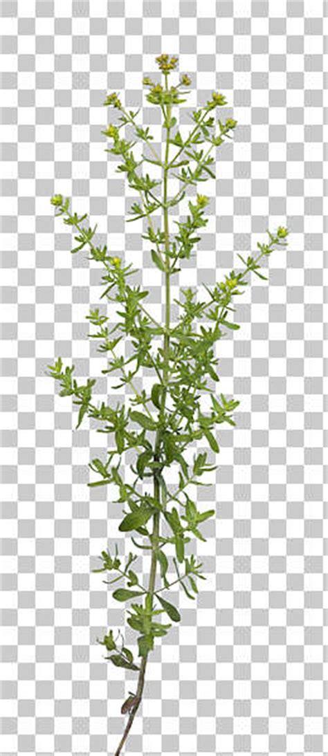 natureplants  background texture plant masked