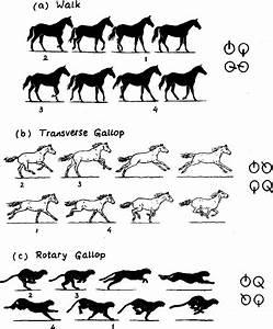 U0351 A  U0352 A Walking Horse   U0351 B  U0352 A Galloping Horse  U0351