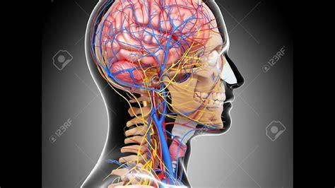 Sinir Sistemi - YouTube