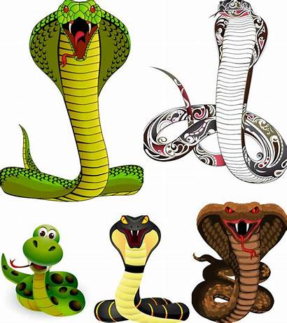 Snake Vector Snakes Illustrations Graphics Cartoon Clip