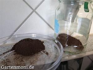 Kaffeesatz Im Garten : kaffeesatz sammeln gartenmoni altes wissen bewahren ~ Whattoseeinmadrid.com Haus und Dekorationen