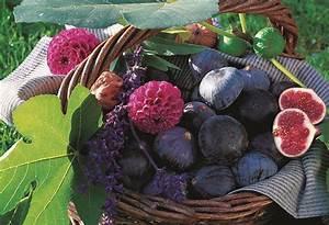Comment Tailler Un Ficus : le figuier comment le planter et le tailler les ~ Melissatoandfro.com Idées de Décoration