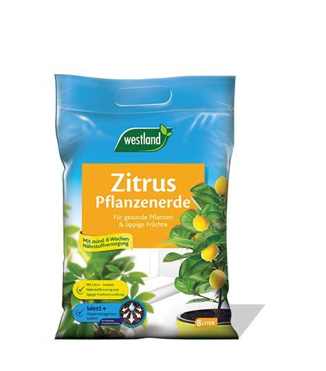 erde für zitruspflanzen westland zitruspflanzen erde seramis