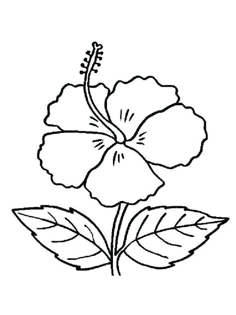coloring pages poinsettia flower  getdrawings