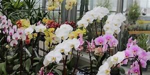 Orchideen Schneiden Video : orchideen schneiden anleitung f r den richtigen r ckschnitt ~ Frokenaadalensverden.com Haus und Dekorationen