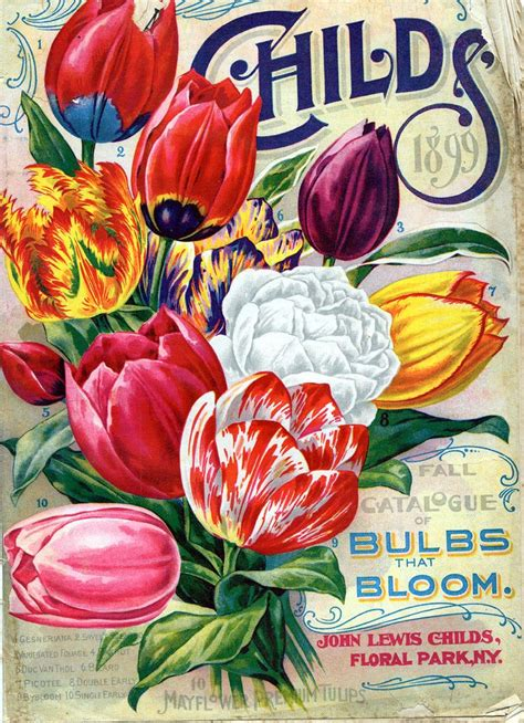 17 best images about 5 vintage plant seed catalogues