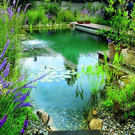 Natural Swimming Pool Costs Less Then A Regular Pool Plus