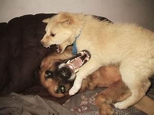 Dog dog aggression victoria stilwell positively for Dog on dog aggression