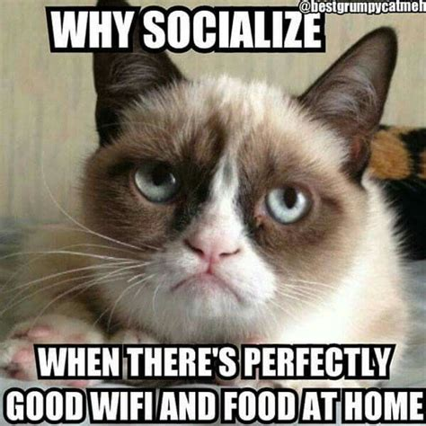 Grumy Cat Memes - 442 best grumpy cat images on pinterest funny stuff ha ha and cats