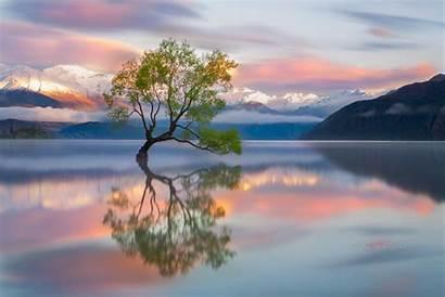Zealand Wanaka Around Karen Tree Lake Lone