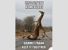funny animal memes Quotes
