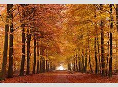 Handige tips voor hét ultieme herfst interieur ALBOEnl