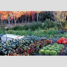 Secrets To A Thriving Fall Vegetable Garden In Wnc Town