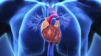 Cardiac Amyloidosis Imitator Clinic Mayo Medical Center