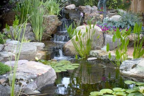 backyard pond  creatively inspired