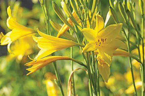 อาทิตย์ละต้น : ดอกไม้จีน - ข่าวสด