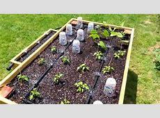 Irrigazione orto coltivare orto Come irrigare l'orto