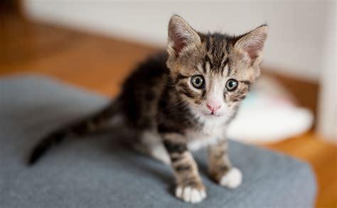 cute kitten names   adorable  fluffball