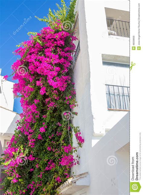Beautiful Climbing Plant With Pink Flowers In A White