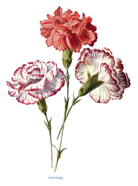 Free Vintage Clip Free Flower Illustrations Clipart Collection