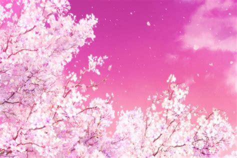 anime cherry blossom wallpaper
