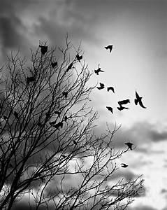 Flying Birds Photograph by Elena Elisseeva