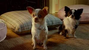 Beverly Hills Chihuahua 3 - Pee Mail - YouTube
