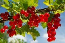Immergrüne Pflanzen Für Balkonkasten : pflanzen gartenpflege garten news terrasse und balkon ~ Markanthonyermac.com Haus und Dekorationen