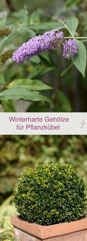 Winterharte Kübelpflanzen Für Terrasse by Die Besten 25 K 252 Belpflanzen Winterhart Ideen Auf