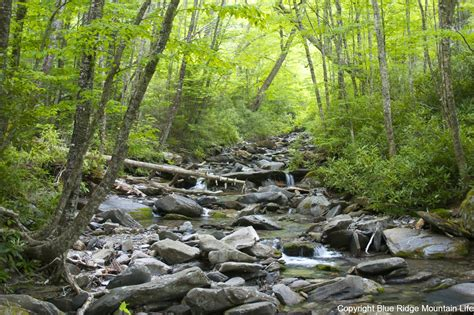 Great Smoky Mountains National Park Photo Page Blue
